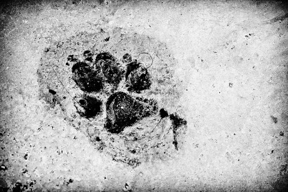 footprint-962170_1920
